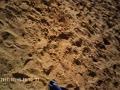 <連載:ウエアラブルカメラでラクダ14>ラクダに鞍を乗せる